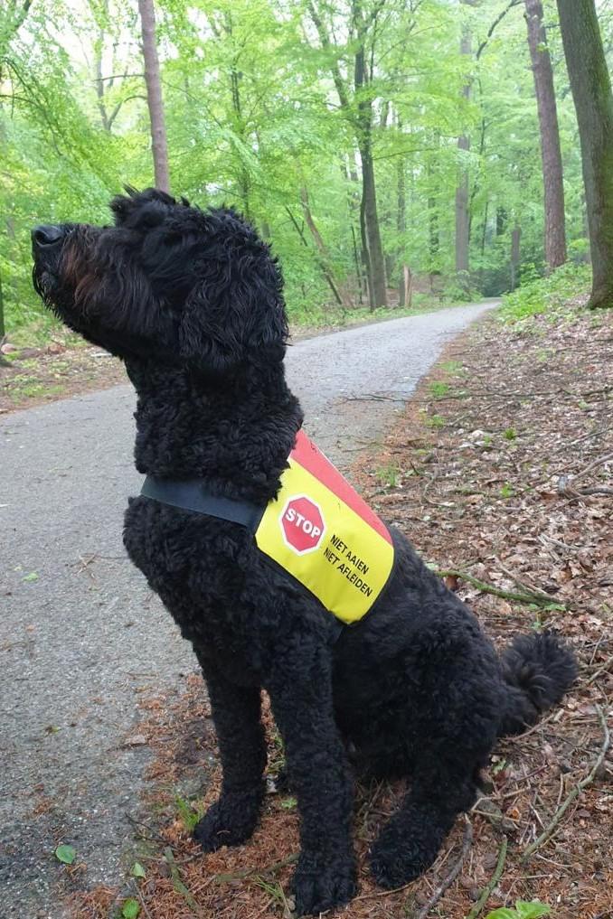 Couverture pour chien d'assistance